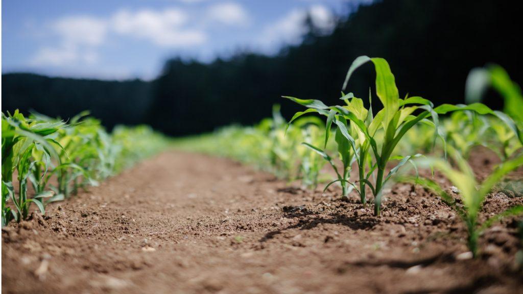 Biogass fra landbruk